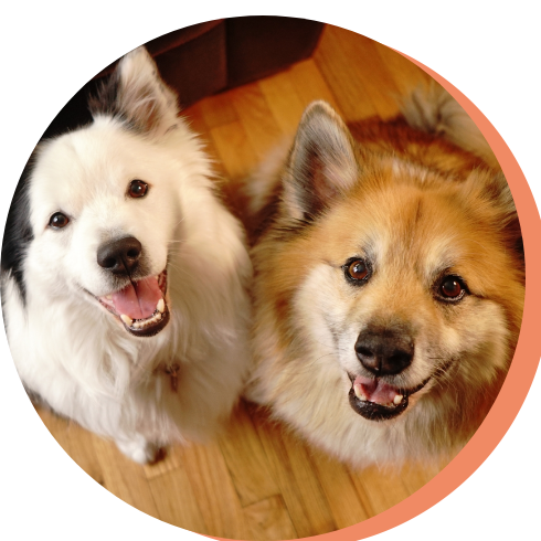 Pet Groomer Placer County
